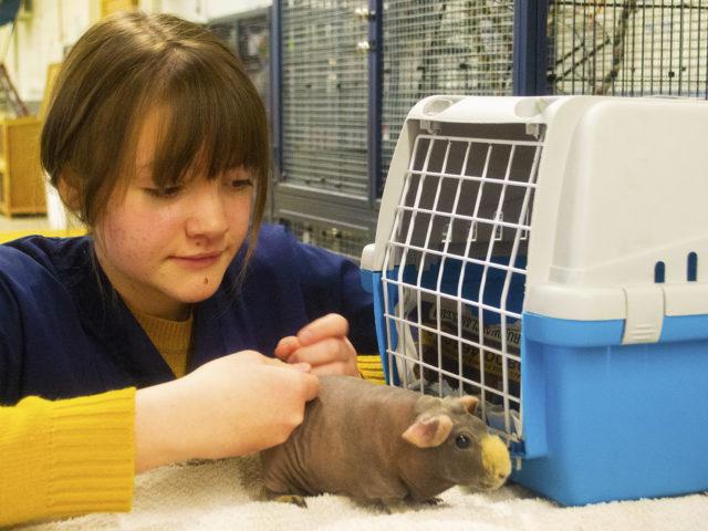 Animal Care. Student petting a small animal