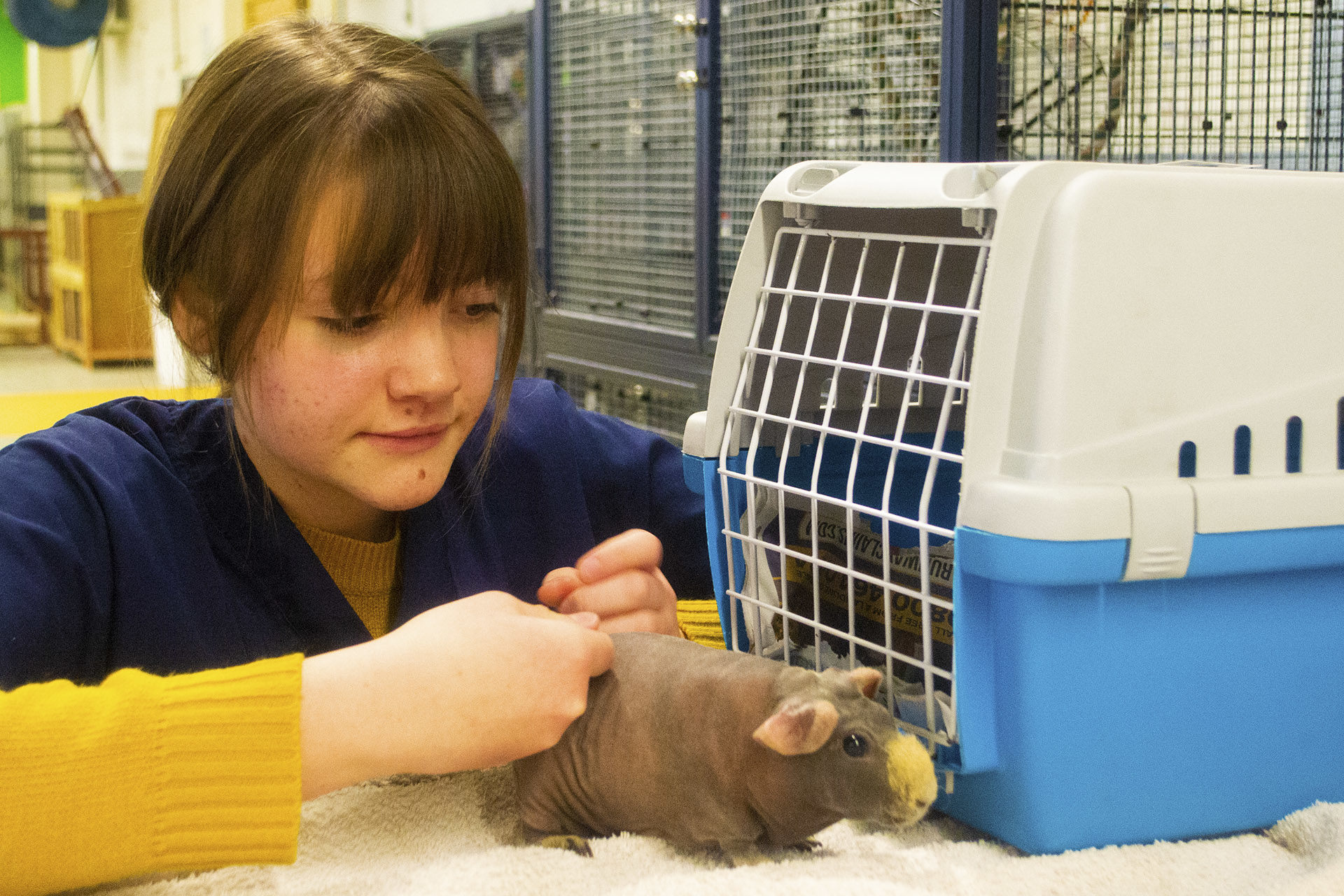 Animal Care. Student petting a small animal