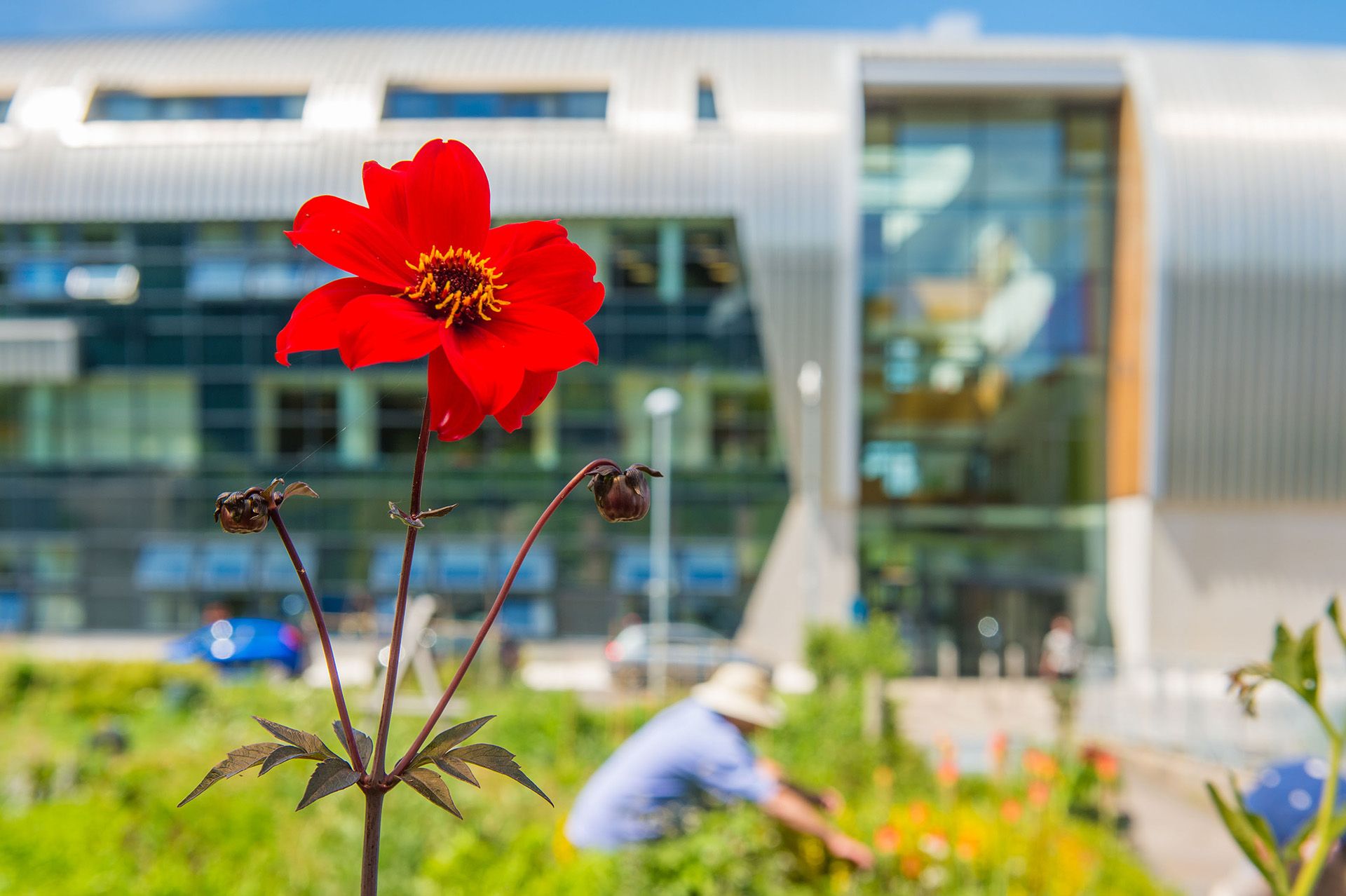 Exterior photo of SBSA campus, gardening and flowers