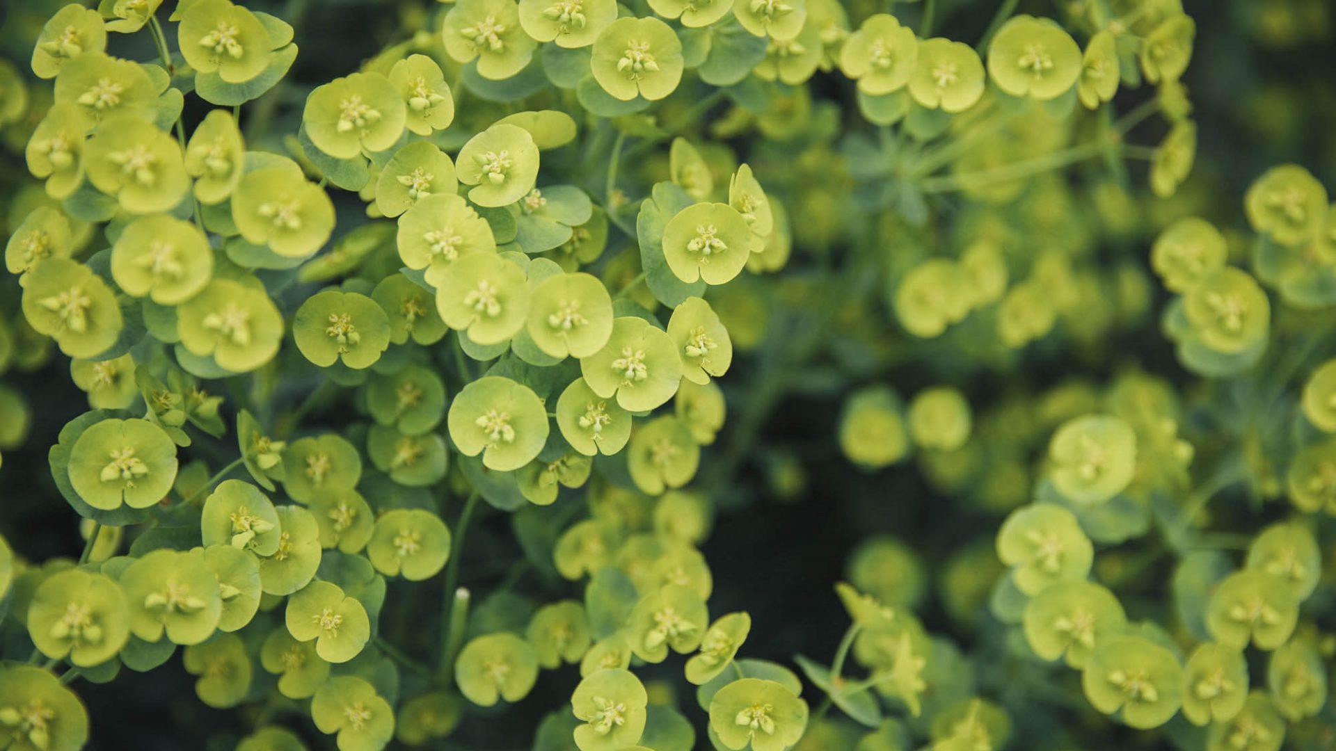 Closeup of plants